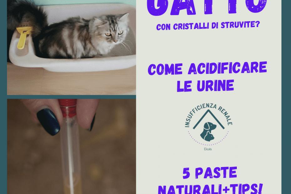 Come acidificare urine gatto