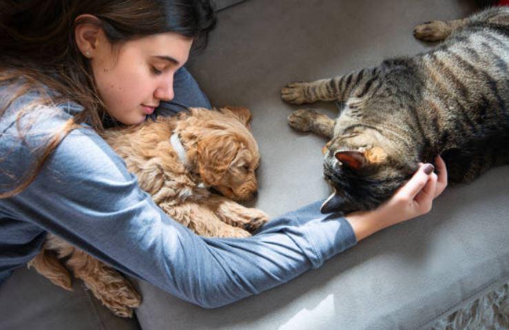 Terapia SUC gatto cane