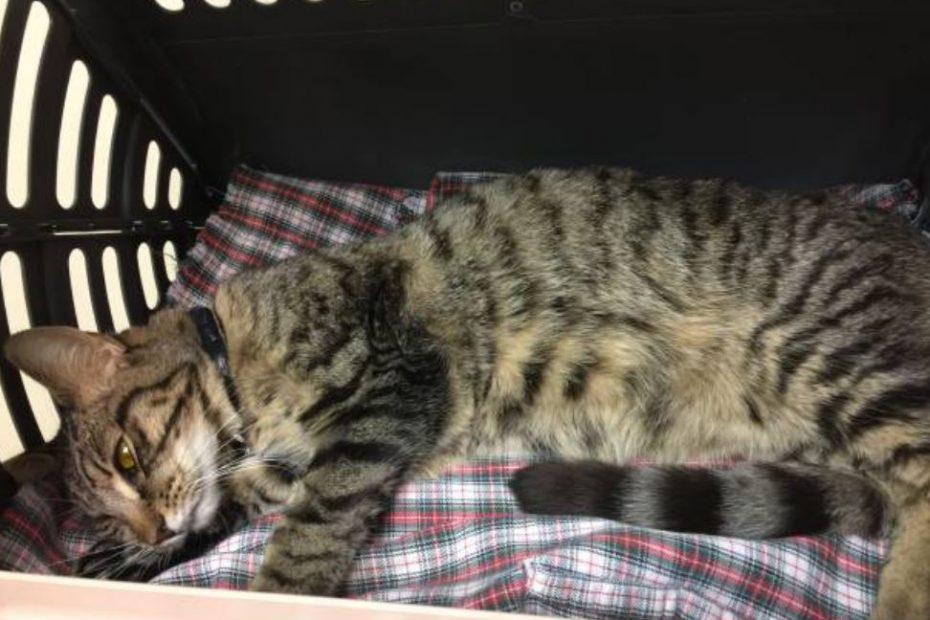 Anemia gatto insufficienza renale