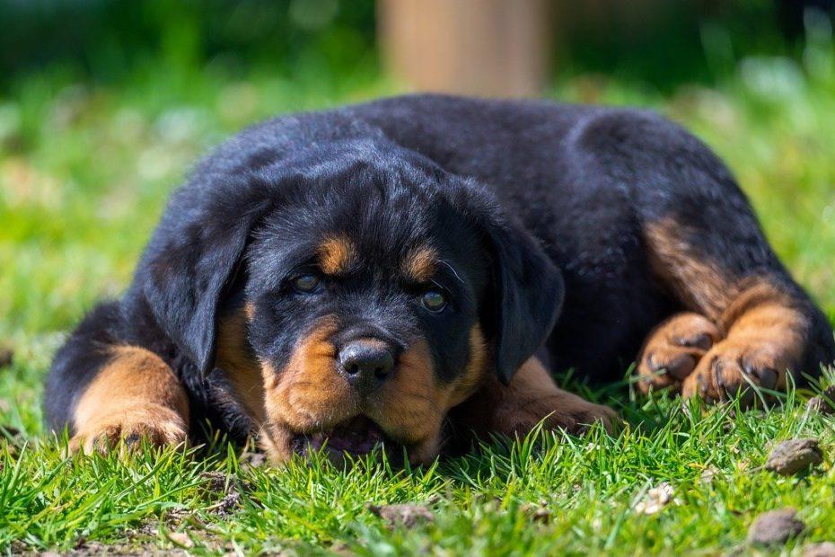 Integratori per cani con insufficienza renale