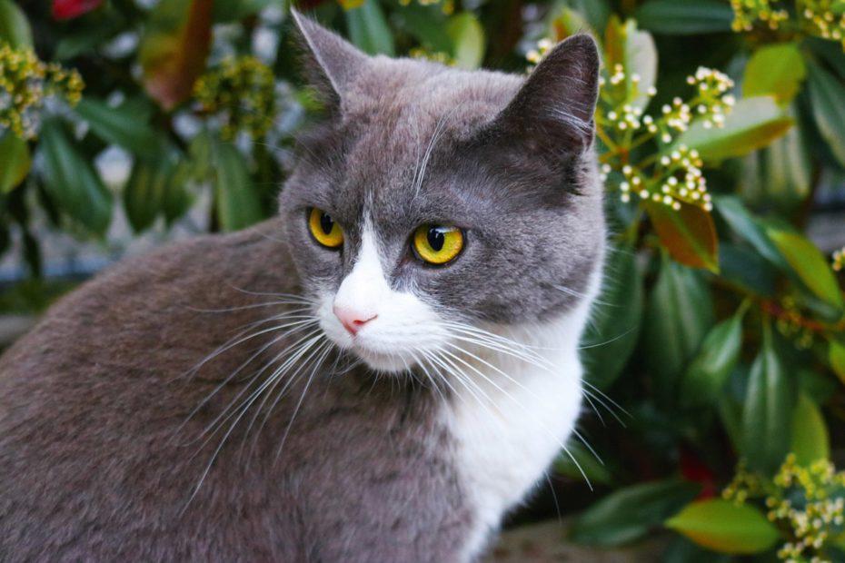 Insufficienza renale gatto anziano
