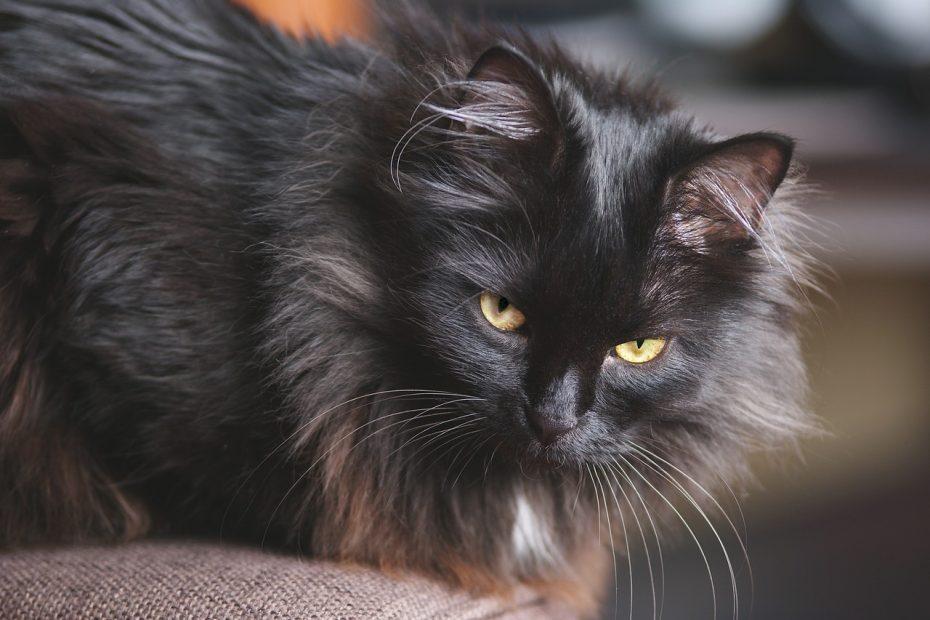 Insufficienza renale gatto cura