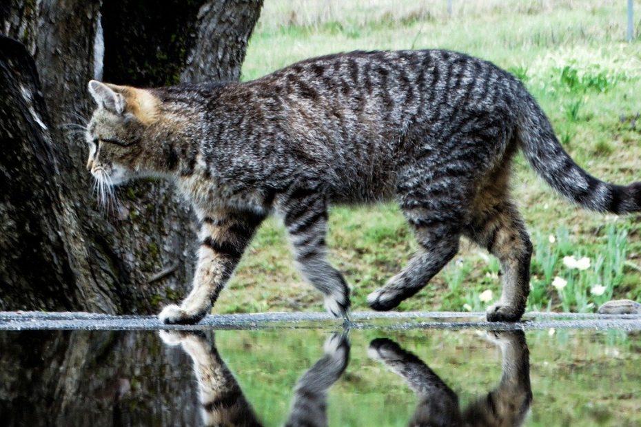 Analisi delle urine gatto