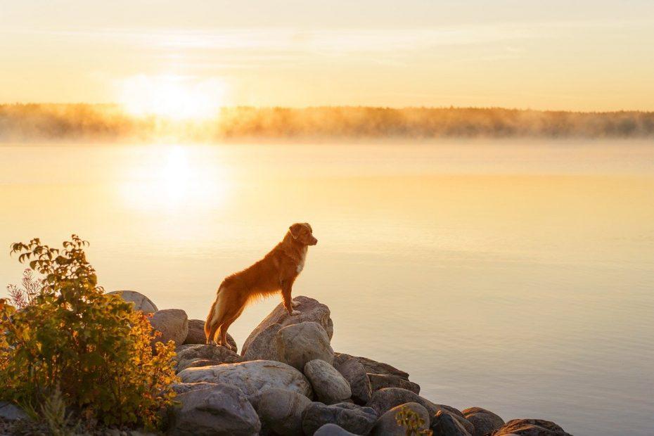 Iperazotemia gatto cane