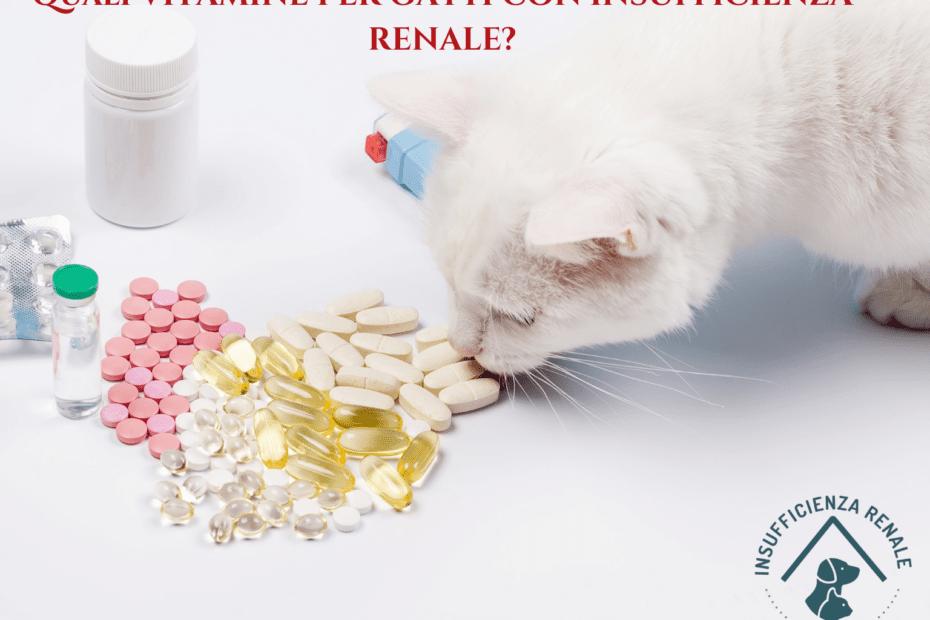 vitamine per gatti con insufficienza renale