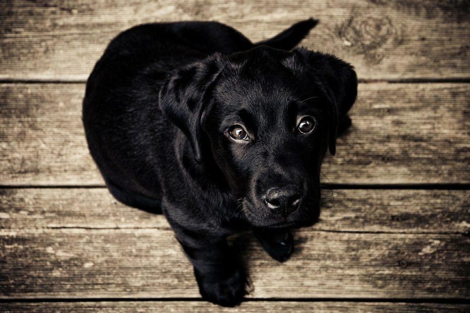 Come Eliminare i calcoli renali nel cane