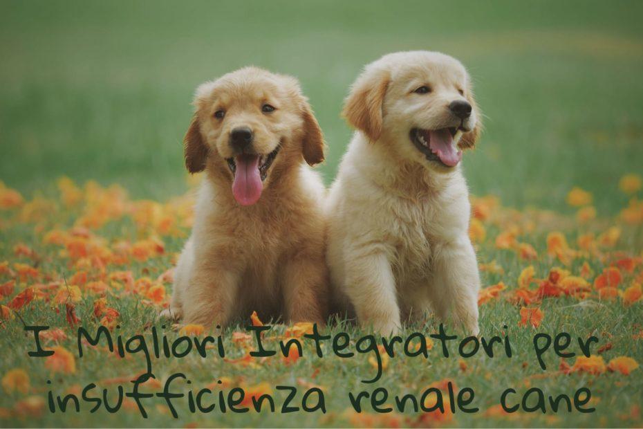 insufficienza renale cane rimedi naturali