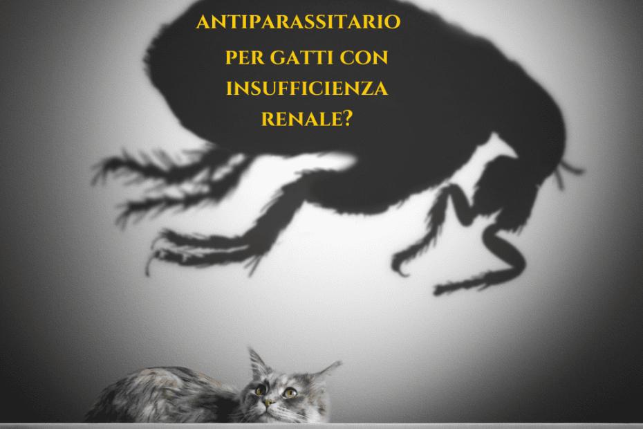 antiparassitario per gatti con insufficienza renale