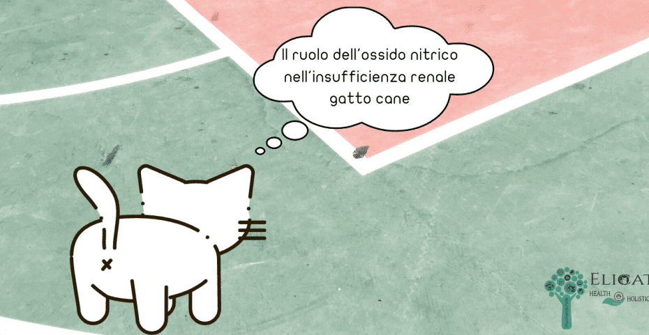ruolo ossido nitrico gatto