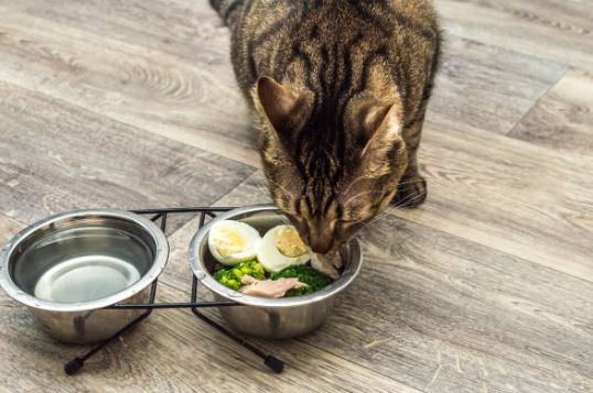 cibo per gatti ocn IRC dieta e ricette