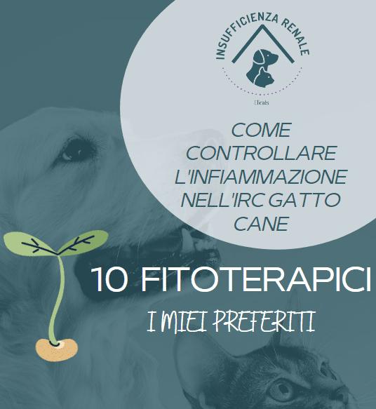 insufficienza renale gatto fitoterapia